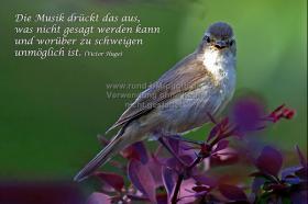 032_Vogelgezwitscher