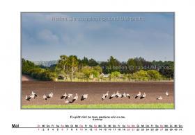 rund-UM-photo_Kalender-Hirntumorhilfe-2018-06