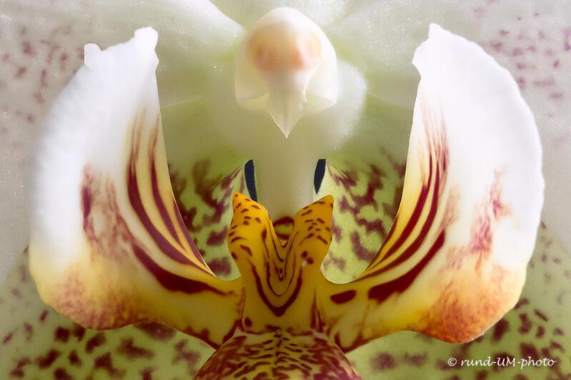 orchidee_II