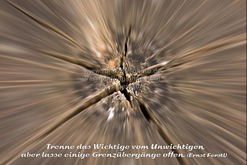 003_Baumscheibe